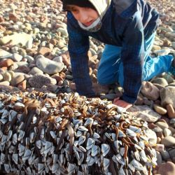 Fin with Goose barnacles