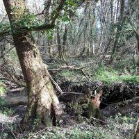 Foxenhole wood stream
