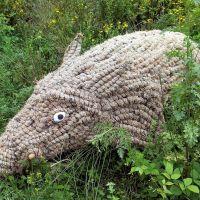 Hog in the woods