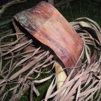 dry willow bark