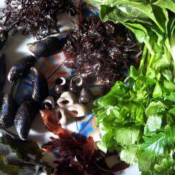 Coastal dish of Alexandas,Sea Beet, Dulse, Pepper Dulce,Sea Lettuce, Winkles, Dog Welks and Mussels