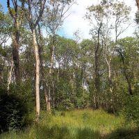 Foxenhole wood. Ash