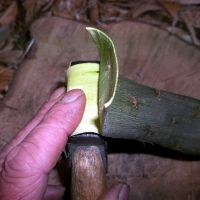peeling willow outer bark on axe
